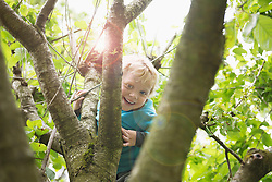 Young blonde boy in garden playing in cherry tree