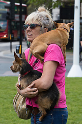 "Westminster, London, May 24th 2016. Animal rights protesters from ""Boycott Dogs4Us"" protest outside Parliament against puppy farming and third party puppy selling as the Environment, Food and Rural Affairs Sub-Committee are investigating the sale of dogs as part of their animal welfare inquiry. PICTURED: A woman watches proceedings with her dogs."