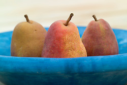 Pears in a blue bowl - Pyrus communis 'Rainier Red'