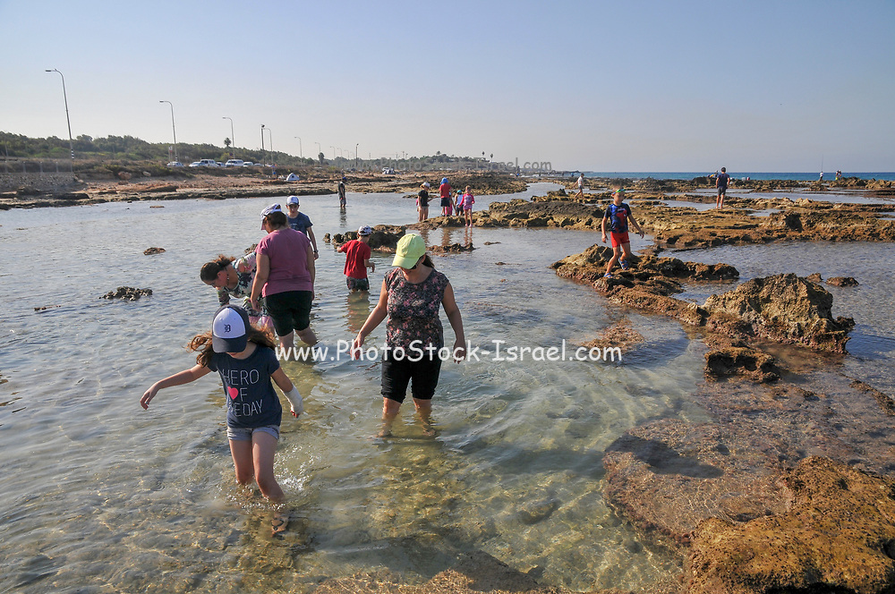 A group of curious children are investigating the living organisms in the shallow tide pools on the beach of Achziv, Galilee, Israel