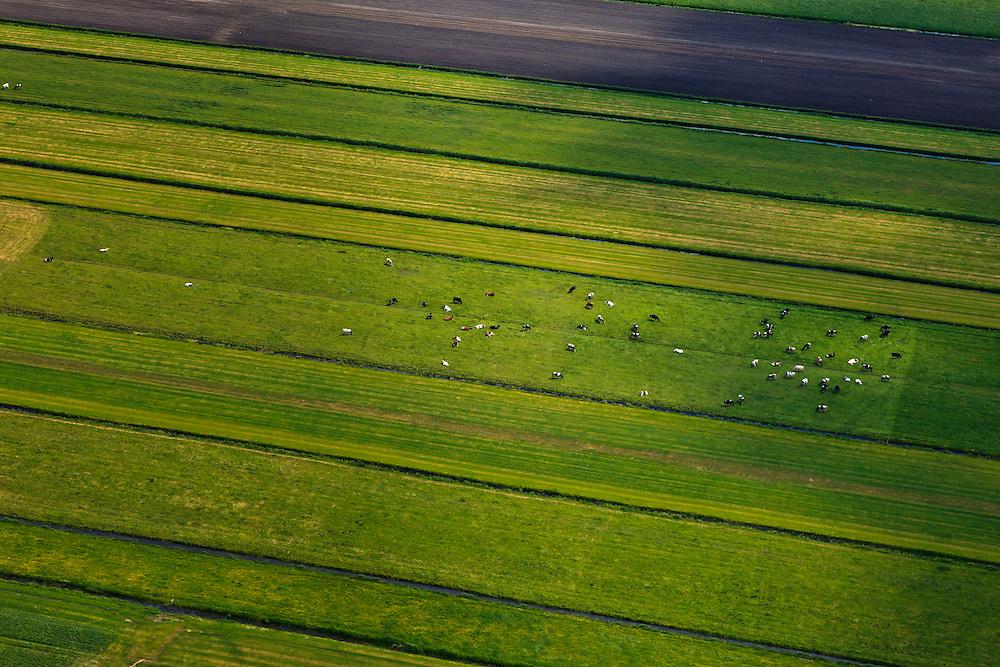 Nederland, Utrecht, Gemeente Stichtse Vecht, 13-05-2011; klassiek veenweide polderlandschap ontstaan door het winnen van veen (vervening), stroken verkaveling. Polder Westbroek, koeien in de wei..Typical Dutch peatland polder (peat bog) landscape wit irregular pattern of drainage. Cows in meadow.luchtfoto (toeslag), aerial photo (additional fee required) foto/photo Siebe Swart