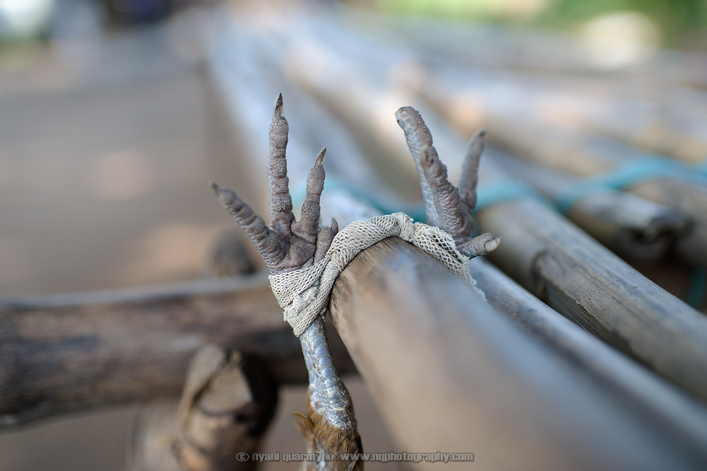 The feet of a live chicken are seen as it hangs upside down from a bamboo bench next to the market in Imurok Payam in Eastern Equatoria, South Sudan on 9 August 2014.