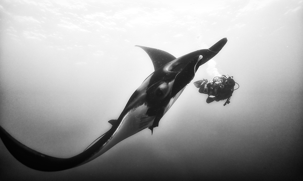 Images created during an expedition to explore the reefs surrounding Clipperton Island, 1200 km away from land.