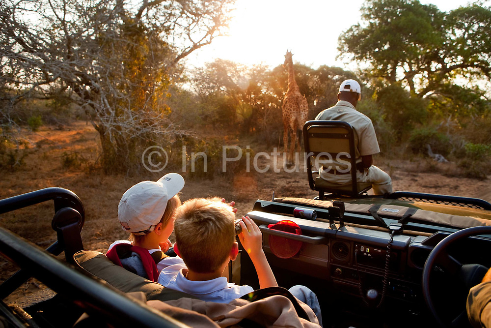 """Robin Tetlow Shooter with Tyler Talmage viewing a giraffe from a safari land cruiser in the Phinda Game Reserve.<br /> <br /> Phinda Private Game Reserve encompasses an impressive 23 000 hectares (56 800 acres) of prime conservation land wilderness in KwaZulu-Natal, South Africa. Showcasing one of the continent's finest game viewing experiences. Phinda is described as """"Seven Worlds of Wonder"""", with its seven distinct habitats - a magnificent tapestry of woodland, grassland, wetland and forest, interspersed with mountain ranges, river courses, marshes and pans. Phinda is a wilderness sanctuary where intimate encounters, adventure and rare discoveries can be experienced firsthand."""
