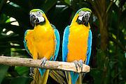 Costa Rica 1-14/23-09 Zoo Ave