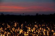 Centralina_MG, Brasil...Plantacao de algodao na BR 153 em Centralina, Minas Gerais...The cotton agriculture in the highway BR 153 in Centralina, Minas Gerais...Foto: LEO DRUMOND / NITRO