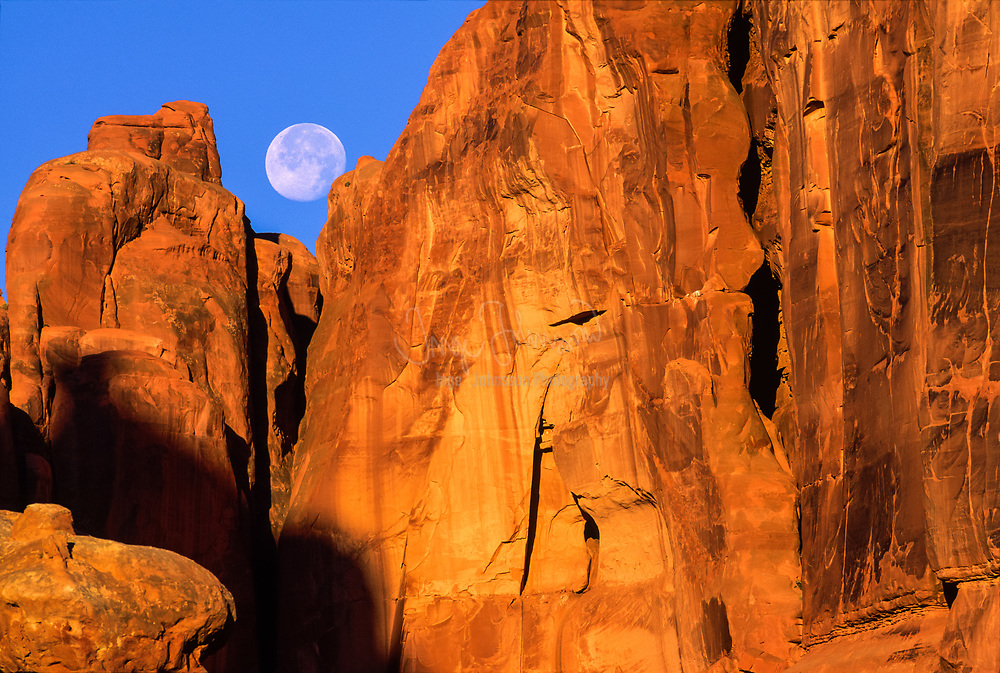 The full moon is setting behind the Wall Street formation one morning at Arches National Park