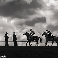 Trainer and racehorses at the top of warren hill, Newmarket