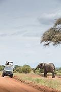 African elephant (Loxodonta africana) and a safari car on a dirt road in Tarangire National Park, Tanzania