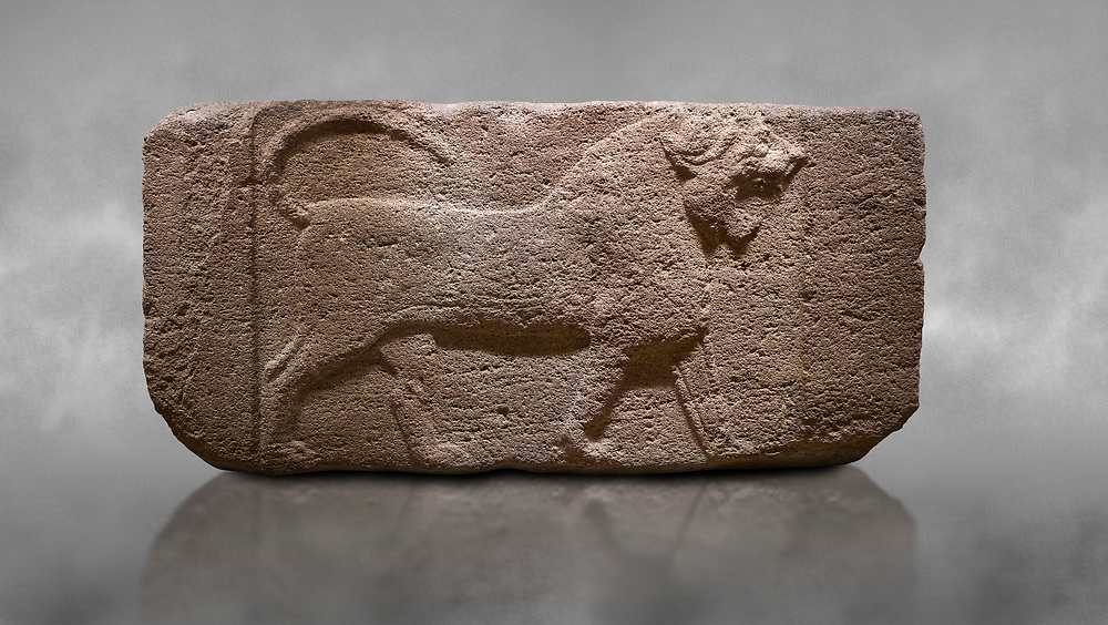 Phygian relief sculpted orthostat stone panel. Andesite, Etimesgut, Ankara. Phrygian. 1200-700 BC. Anatolian Civilisations Museum, Ankara, Turkey.<br /> <br /> Figure of a roaring lion. The cross mark on the chest draws attention. The muscles in his legs are schematic. There are frame edges in front and behind the lion. <br /> <br /> Against a grey art background. .<br /> <br /> If you prefer you can also buy from our ALAMY PHOTO LIBRARY  Collection visit : https://www.alamy.com/portfolio/paul-williams-funkystock/phrygian-antiquities.html  - Type into the LOWER SEARCH WITHIN GALLERY box to refine search by adding background colour, place, museum etc<br /> <br /> Visit our CLASSICAL WORLD PHOTO COLLECTIONS for more photos to download or buy as wall art prints https://funkystock.photoshelter.com/gallery-collection/Classical-Era-Historic-Sites-Archaeological-Sites-Pictures-Images/C0000g4bSGiDL9rw