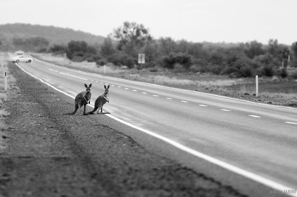 Stuart highway, Northern Territory, Australia, Oceania