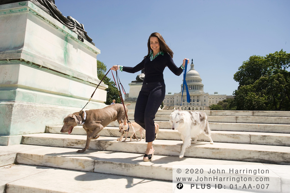 """Kristin Davis, former star of Sex and the City and currently in """"The Shaggy Dog,"""" takes a stroll around the US Capitol while walking dogs on Wednesday May 10, 2006."""