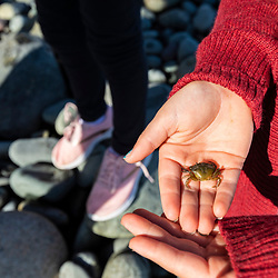 A girl holds a crab in a cove in Quoddy Head State Park in Lubec, Maine.
