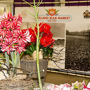 NLD/Heiloo/20180420 - Prinses Margriet bij jubileum Holland Bulb Market, Amarylis