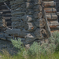 An old homesteader's cabin decays on the PN Ranch in the Upper Missouri River Breaks of central Montana.