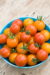 Turquoise bowl of mixed cherry tomatoes. Tomato 'Gardeners' Delight' and 'Sungold'