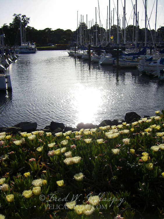Santa Cruz Harbor 1204
