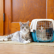 20130321 Travel Cats County Living