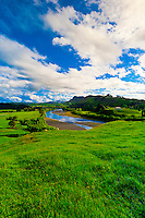 Sheep grazing in the Tuki Tuki Hills (with the Tukituki River and Te Mata Peak in back), near Napier, Hawkes Bay, north island, New Zealand