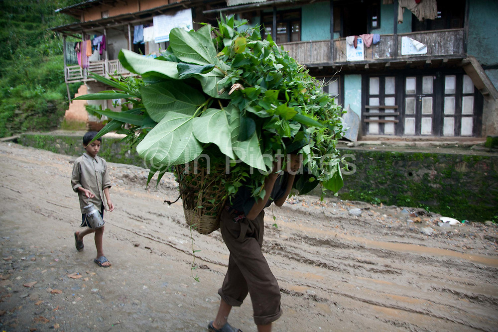 A farmer is carrying his harvest of greens in his wicker basket on his back in a traditional Nepalese style in a small village in Dolakha district.