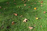Autumn sprinkle