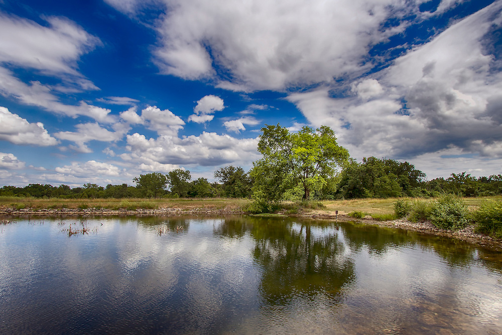 A Bold Green Summer Tree reflects off of Lake 15 at August A. Busch Memorial Conservation Area catch Bright Blue Skies and Puffy Clouds on a Summer Afternoon