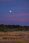 The nearly full moon rises at sunset as great blue herons hunt in Edmonds Marsh in Edmonds, Washington. The 23-acre saltwater marsh is home to more than 200 species of birds each year and is one of the last remaining saltwater estuaries in the greater Seattle area.