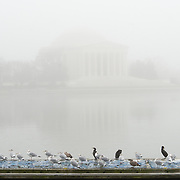 The Jefferson Memorial in a dense fog over the Tidal Basin on a cold winter's day in Washington DC. Birds sit on a pontoon in the foreground, with the memorial largely obscurred by fog in the background.