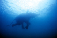 Underwater Assignment Photography