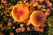 A mushroom or toadstool is the fleshy, spore-bearing fruiting body of a fungus, typically produced above ground, on soil, or on its food source