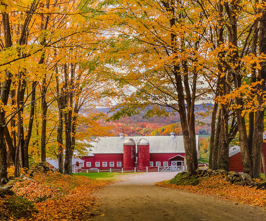 Country road in fall & view of red barn with twin silos, near Reading, VT