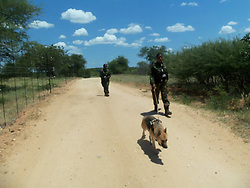 July 7, 2015 - BALULE RESERVE, SOUTH AFRICA: Patroling with a dog. LED BY BRITISH former military personnel these pictures show how courageous women anti-poachers train with guns in their battle to preserve Africa's endangered animals. Operating in the Kruger National Park's Balule Nature Reserve the 24-member strong all-female Black Mamba Anti-Poaching Unit patrols 50,000 hectares of bush to protect elephants and rhinos that are hunted as part of the estimated £12billion a year illegal world animal trade. These ladies, who as pictures show pose with weapons but also know how to party, are on the front line of a deadly war for the resources of their continent. Over the past year 1,000 wildlife rangers have been killed in Africa while protecting endangered wildlife. Black Mamba Commander and former Royal Navy serviceman Russell Baker (28) from Grimsby, UK explained exclusively how and why this South African special unit was established. (Credit Image: © Media Drum World/MediaDrumWorld/ZUMAPRESS.com)