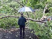 20160514_Fallen Tree at Travis Brown's home