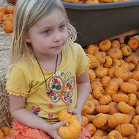 USA, California. Young girl in a pumpkin patch at Halloween carnival.