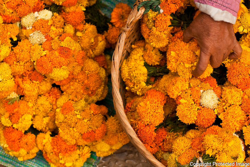 flowers for religious offerings, Luang Prabang market, Lao