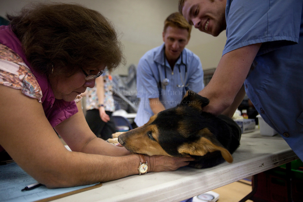 """MCDERMITT, NV - AUG 16:  Delores Snapp comforts """"Club"""" as Todd Berlier and Steve McGrath both DVM students  go through a routine check up during a clinic sponsored by the Humane Society of the United States August 16, 2009 in McDermitt Nevada.  (Photograph by David Paul Morris)"""