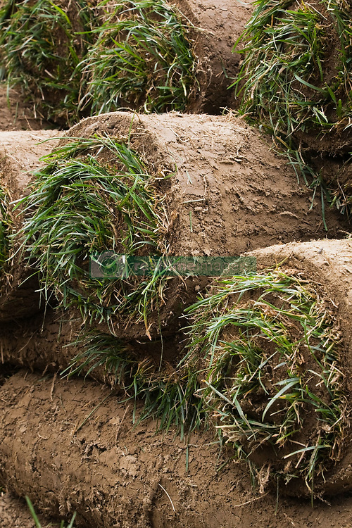 Rolled up turf (Credit Image: © Image Source/Perry Mastrovito/Image Source/ZUMAPRESS.com)
