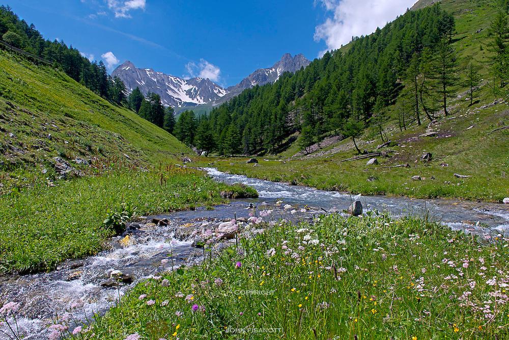 Great St. Bernard Creek, Italy