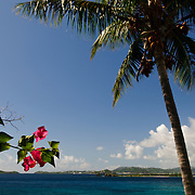 Caribbean view with palm tree and tropical flowers. Please note: shallow depth of field with focus on pink flowers