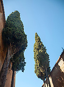 Tall cypress trees against blue sky the Alhambra complex, Granada, Spain