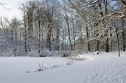 Schaep en Burgh Winter, koud, cold snow, sneeuw, winter, cold, wit, white