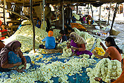 Indian women and children at work stringing garlands at Mehrauli Flower Market, New Delhi, India