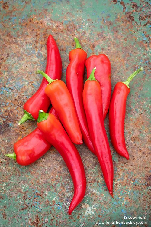 Capsicum annuum 'Hot Shakira' -  Chilli pepper