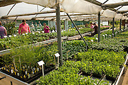 People inside nursery greenhouse selecting plants