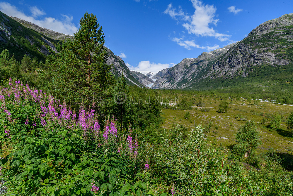 The glaciers Nigardsbreen and Jostedalsbreen in Jostedalen National Park, Luster, (Vestland county), Norway in July 2021.