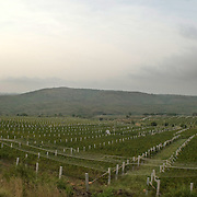 Grover Vineyards at Nandi Hills outside of Bangalore, Karnataka, India, is one of the most well respected and reviewed wineries emerging in India.