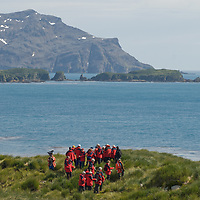 A group of eco-tourists explores Prion Island in the Bay of Isles, South Georgia, Antarctica.
