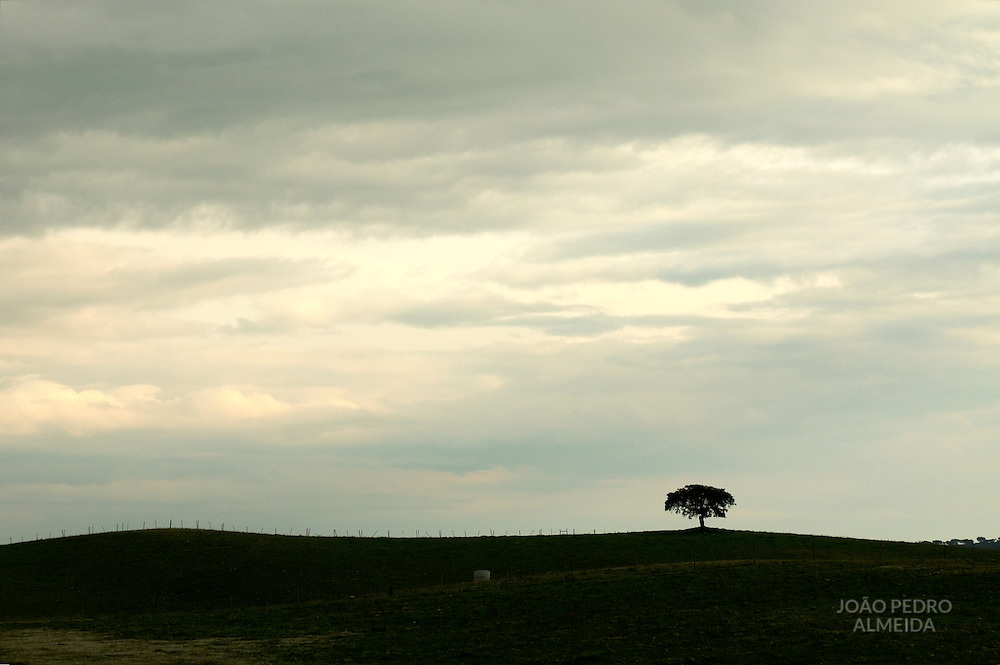 Lonely cork tree standing in the Alentejo plains under stormy skies