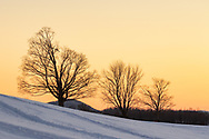 Three trees in a snowy field on a farm in the Town of Goshen, N.Y., at sunset on Dec. 18, 2020.