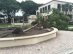 October 9, 2016 - Florida, U.S. - The tree next to the City Hall Annex on Lake Avenue was one of several blown over by Hurricane Matthew. (Credit Image: © The Palm Beach Post via ZUMA Wire)